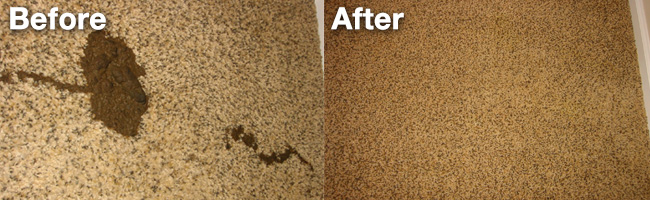 Success Story - Carpet Poop Removal by Aquakor in Santa Clarita